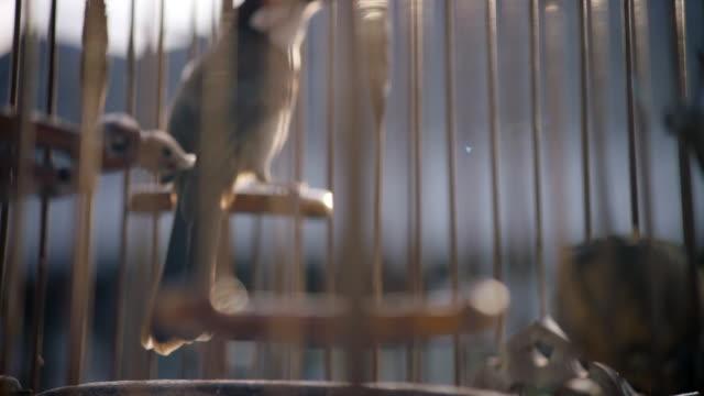 bird in cage - gabbia per gli uccelli video stock e b–roll