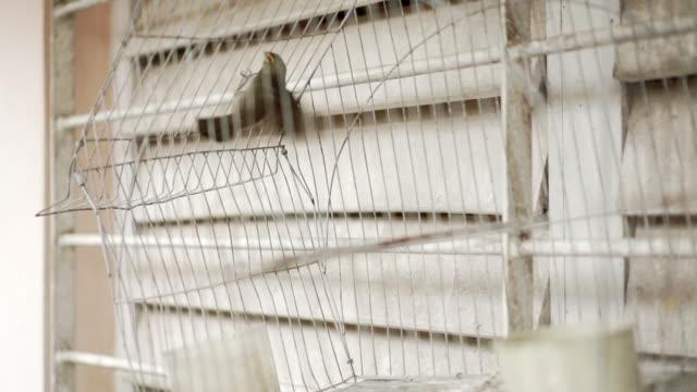vídeos de stock, filmes e b-roll de pássaro em gaiola - encurralado