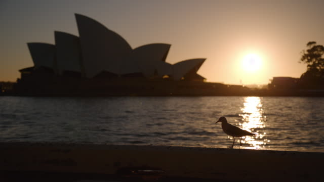 bird in silhouette in front of sydney opera house at dawn - オペラ座点の映像素材/bロール