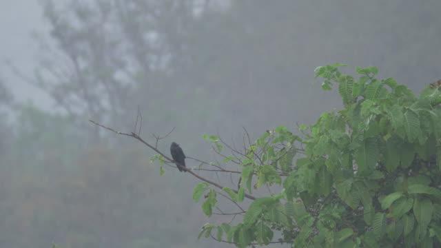 Bird in the rain.(4K)