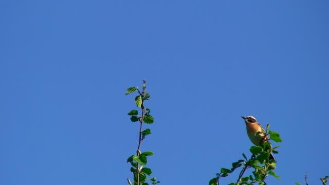鳥のランディング、ツリートップ - 枝点の映像素材/bロール