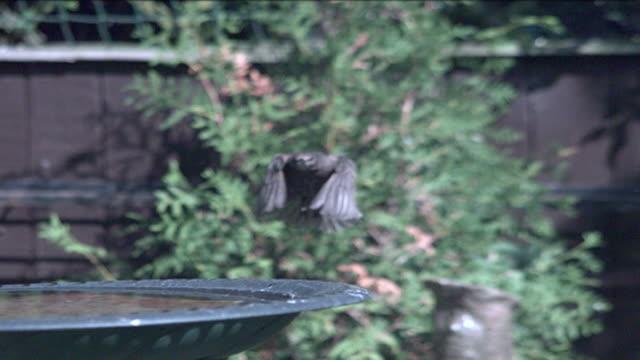 Bird Landing Zeitlupe
