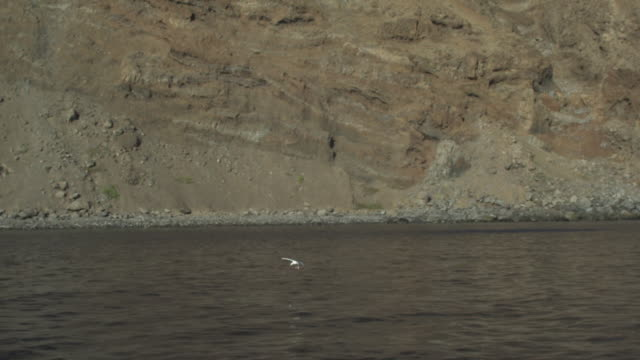 bird lands on water in front of cliffs, guadalupe island, mexico, 2012 - water bird video stock e b–roll
