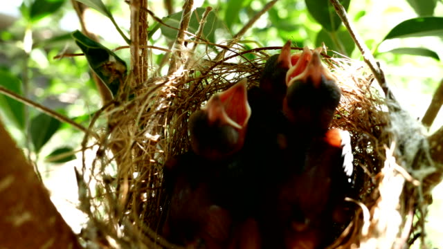 bird life cycle - life cycle stock videos & royalty-free footage