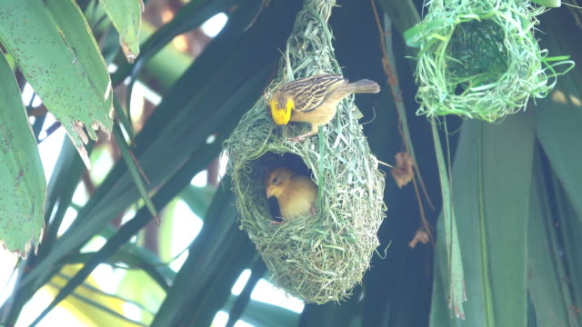 bird making bird's nest - animal nest stock videos & royalty-free footage