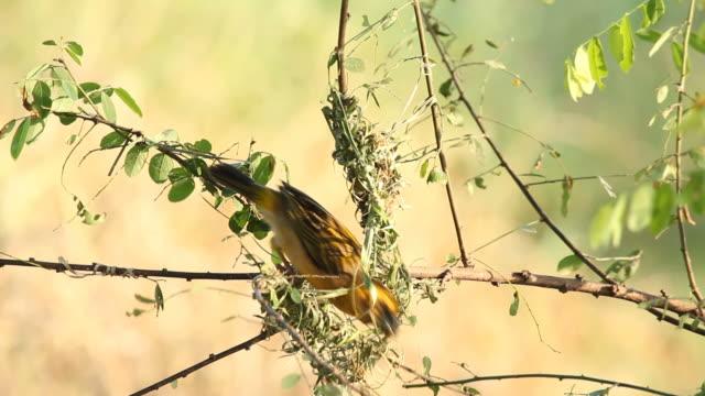 Bird making bird's on the tree