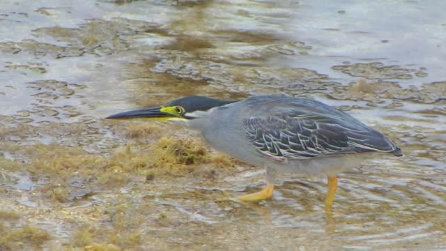 vídeos de stock, filmes e b-roll de bird mauritius - ilhas mascarene