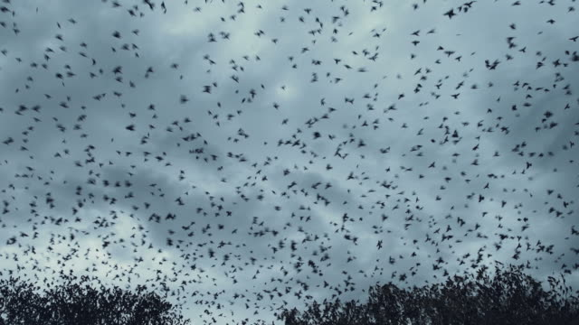 bird migration - flock of birds stock videos & royalty-free footage