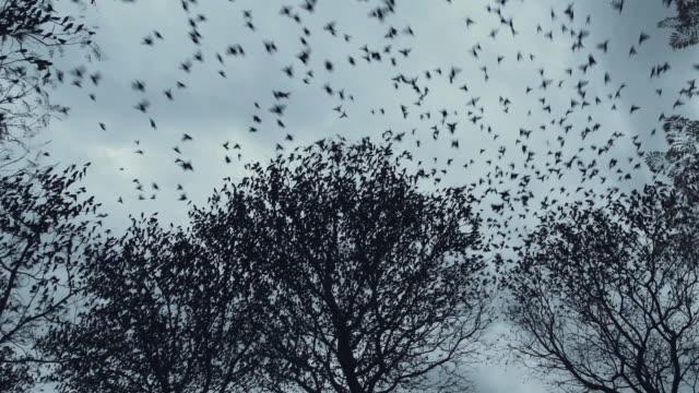 vídeos y material grabado en eventos de stock de pájaro de migración - percepción sensorial
