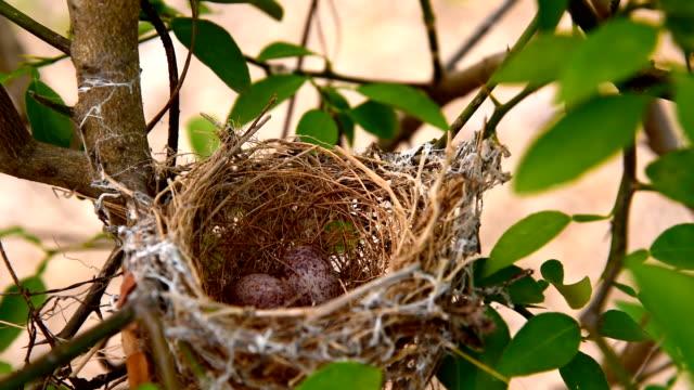 vídeos y material grabado en eventos de stock de nido de pájaros y huevo - cinco objetos