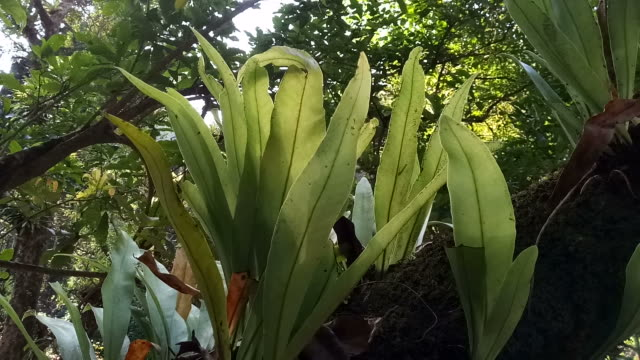 bird nest fern on tree in forest - tree fern stock videos & royalty-free footage