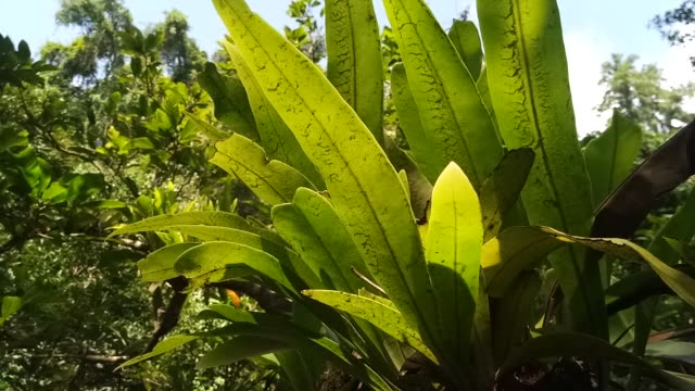bird nest fern with sunlight on tree - tree fern stock videos & royalty-free footage