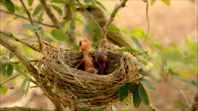 bird nest - bird's nest stock videos & royalty-free footage