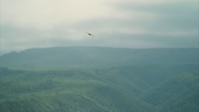 a bird of prey soars over hills in dagestan. - bird of prey stock videos & royalty-free footage