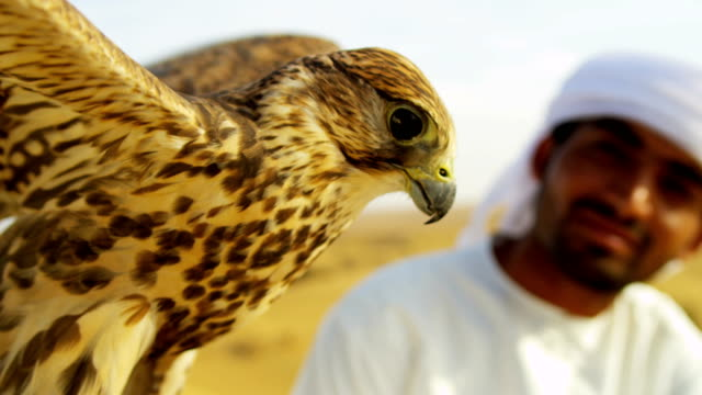 bird of prey with male middle eastern owner - falcon bird stock videos & royalty-free footage
