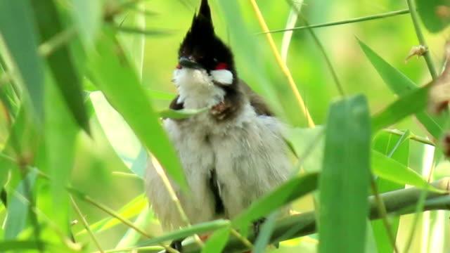 Vogel auf einem Ast Baum in wild