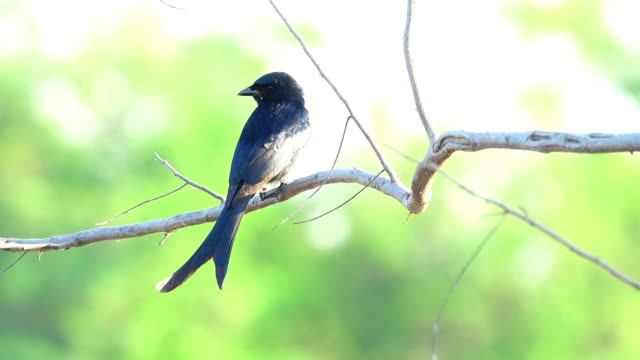 bird on a branch - songbird stock videos & royalty-free footage