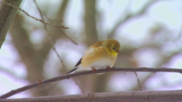 bird on a twig slow motion - twig stock videos & royalty-free footage