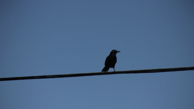 bird on a wire (flies away) - crow stock videos & royalty-free footage