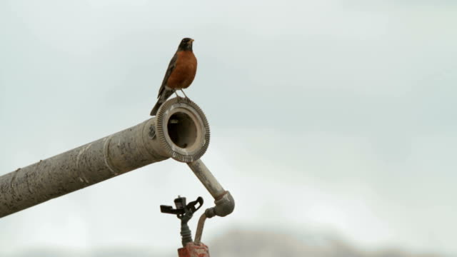bird on pipe - north america stock videos & royalty-free footage
