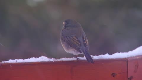 stockvideo's en b-roll-footage met bird on railing flies away, close up - veiligheidshek