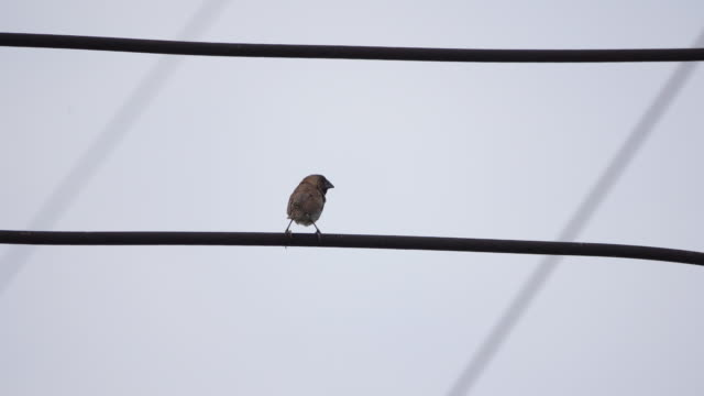4k bird on the electric wire - telephone line stock videos and b-roll footage