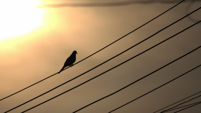 vídeos de stock, filmes e b-roll de 4 k pássaro no fio elétrico - arame