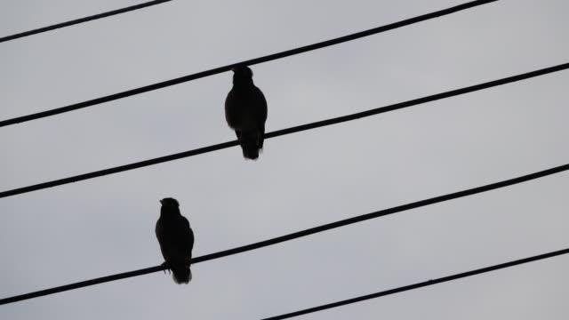 vídeos y material grabado en eventos de stock de 4 de k de pájaro en el alambre eléctrico - alambre