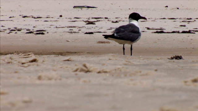 A bird on the sand.