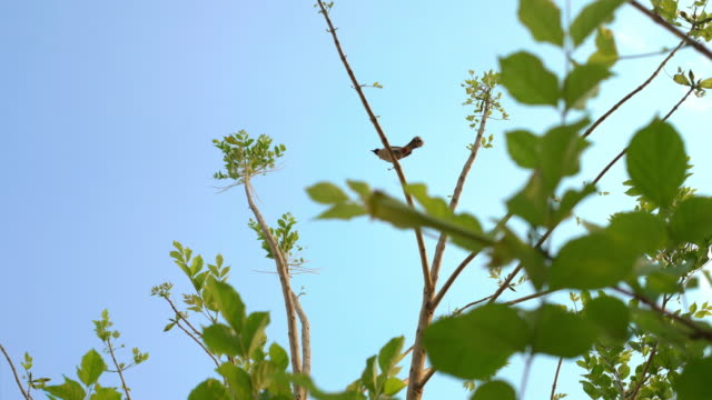 bird on the tree and blue sky - sparrow stock videos & royalty-free footage