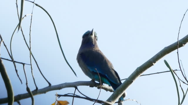 bird on tree branch - tropical tree stock videos and b-roll footage