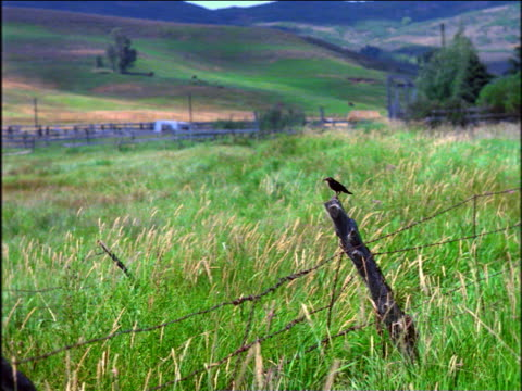 bird perched on fence post in grassy field - perching stock videos & royalty-free footage