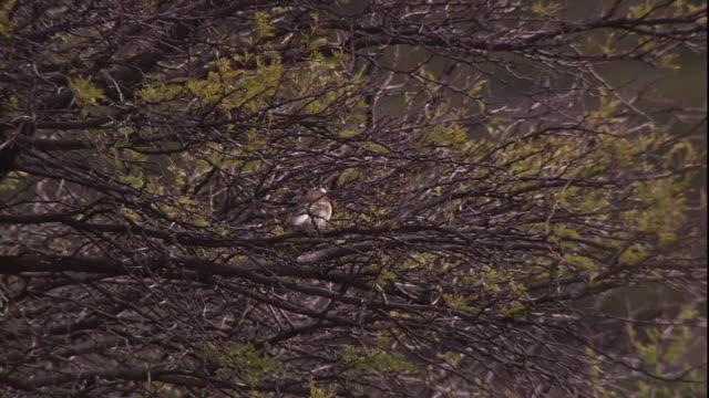 a bird perches in a bush. - bush stock videos & royalty-free footage
