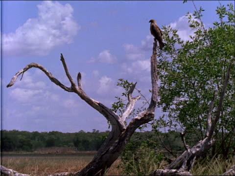 vídeos y material grabado en eventos de stock de a bird perches in bare tree. - bare tree