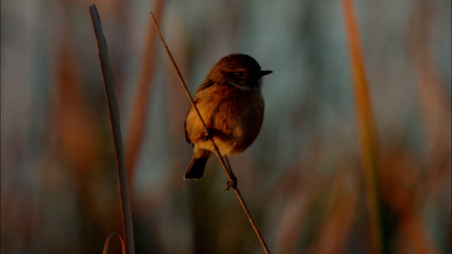a bird perches on a small twig. - twig stock videos & royalty-free footage