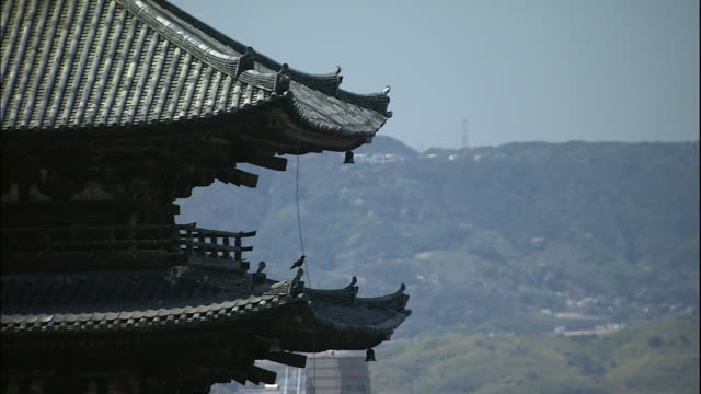 a bird perches on the to-ji temple's roof in kyoto, japan. - pagode stock-videos und b-roll-filmmaterial