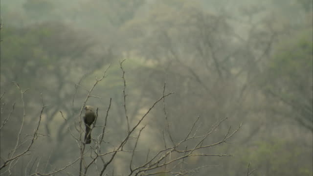 A bird perches on twigs. Available in HD