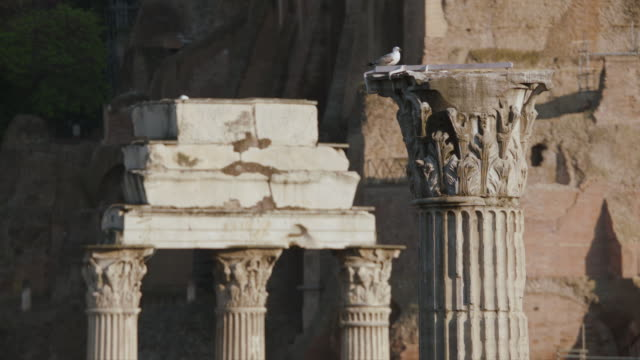 ms bird perching on old ruins / rome, italy - three animals stock videos & royalty-free footage