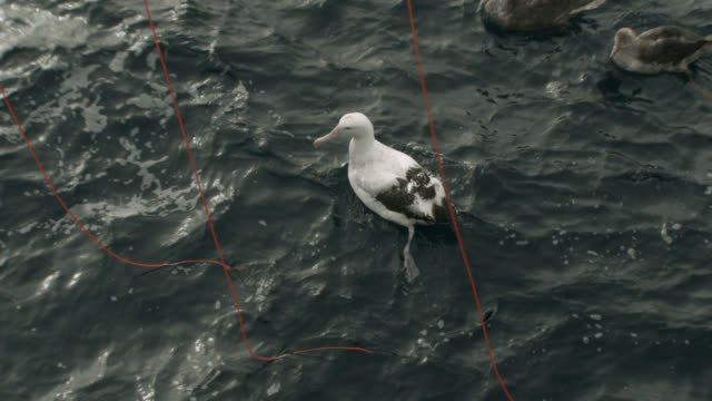bird scarer lines keep albatross away from fishing boat - small group of animals stock videos & royalty-free footage