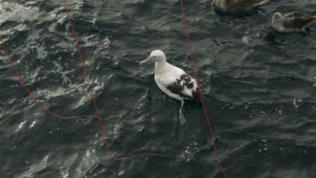 bird scarer lines keep albatross away from fishing boat - kleine gruppe von tieren stock-videos und b-roll-filmmaterial