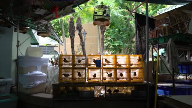 bird shop - petshop stock videos and b-roll footage