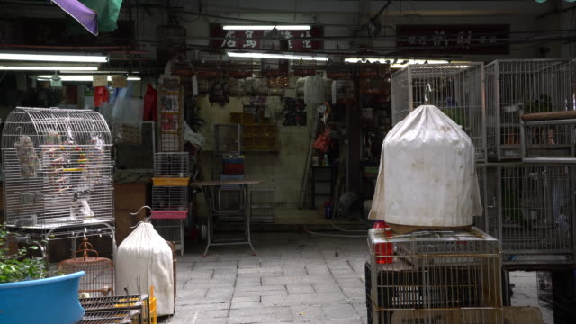 vídeos y material grabado en eventos de stock de bird shop - grupo mediano de animales