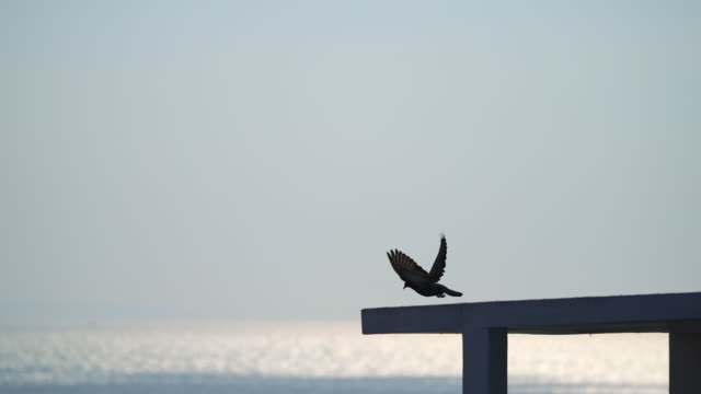 bird silhouette sitting and flying away on rooftop with sea reflection - sea bird stock videos & royalty-free footage