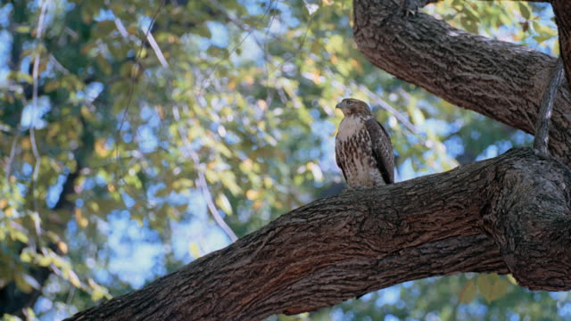 a bird sits on a tree branch in new york city's central park. - 2008 stock videos & royalty-free footage