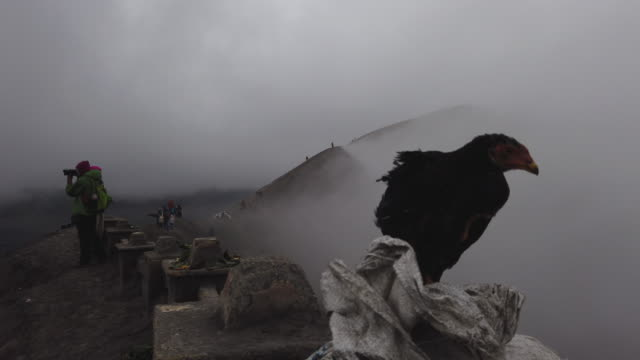a bird sits on the edge of crater of mount bromo tenggerese worshippers stands during the yadnya kasada festival at crater of mount bromo on july 18... - tengger stock videos & royalty-free footage