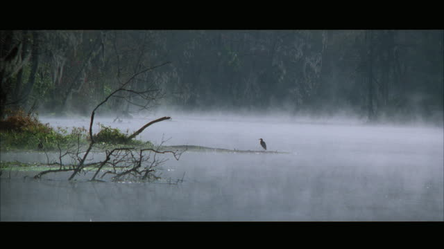 ws bird sitting on small land mass in water - water bird stock videos & royalty-free footage