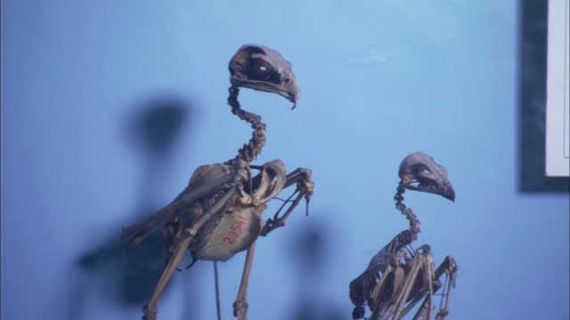 Bird skeletons stand on perches next to Egyptian bird statues and mummies.