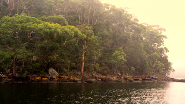Bird sounds in the bush at Pittwater