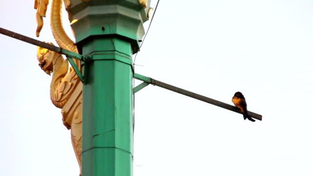 vogel stand op pijler