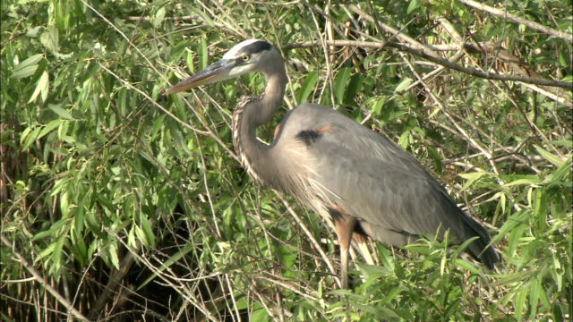 a bird stands on a lush bank in the florida everglades. - everglades national park stock videos & royalty-free footage